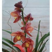 Orquídea Cymbidium chocolate 1 haste no cachepô