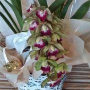 Orquídea Cymbidium Pendente