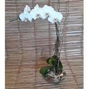 Orquídea Phalaenopsis 1HA Branca no cachepô de vidro