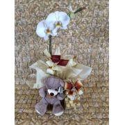 Orquídea Phalaenopsis Combo 01