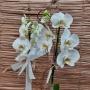 Orquídea Phalaenopsis branca 2 Haste no cachepô