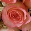 Rosa Ambiance Cor-de-rosa