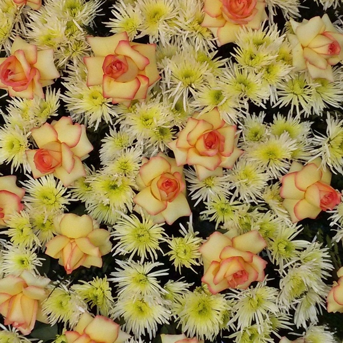 Coroa de Crisântemos Macarrão e Rosas Ambiance