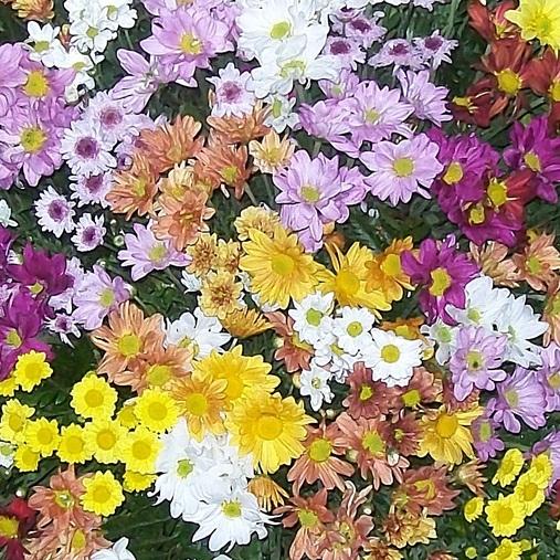 Coroa de Flores do Campo Colorida
