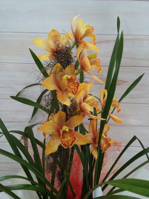 Orquídea Cymbidium laranja 1 haste no cachepô
