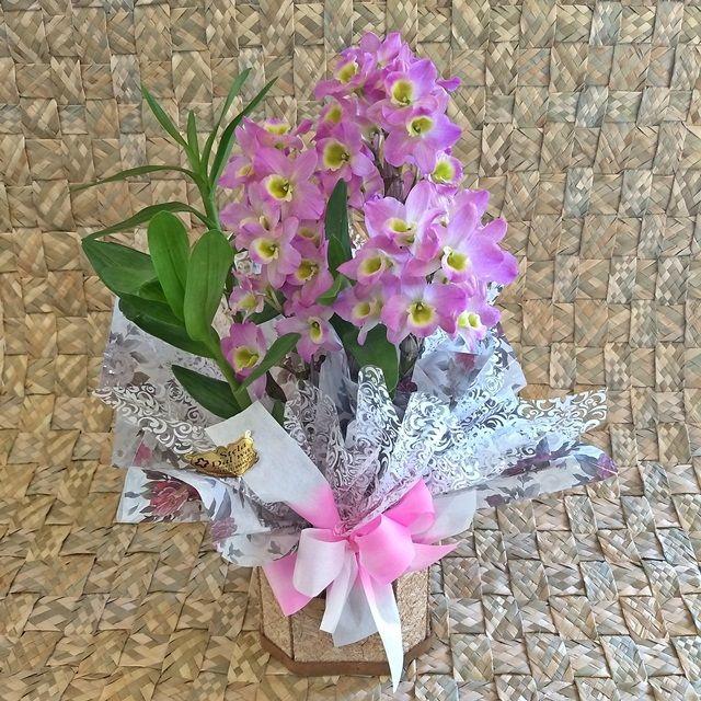 Orquídea Dendrobium pote-15 no cachepô madeira