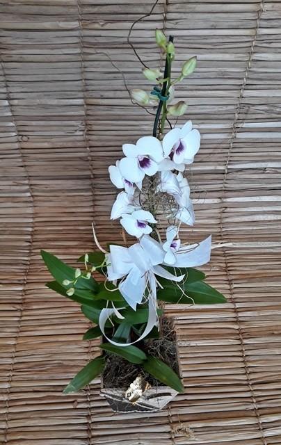 Orquídea Denfal branca alta no cachepô