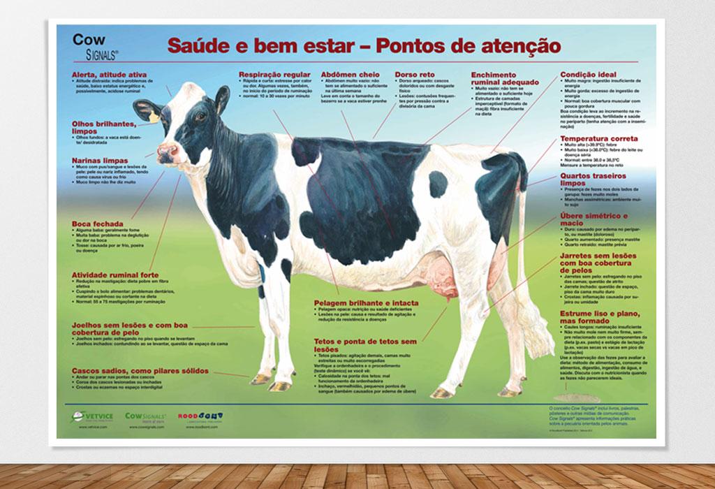 Pôster Vaca Saudável - Saúde e bem estar – Pontos de atenção