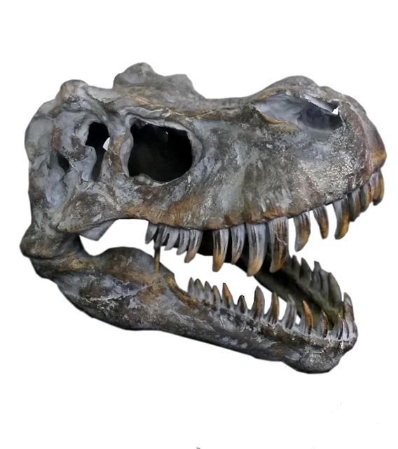 Fóssil Crânio de Tiranossauro Rex - Oldway