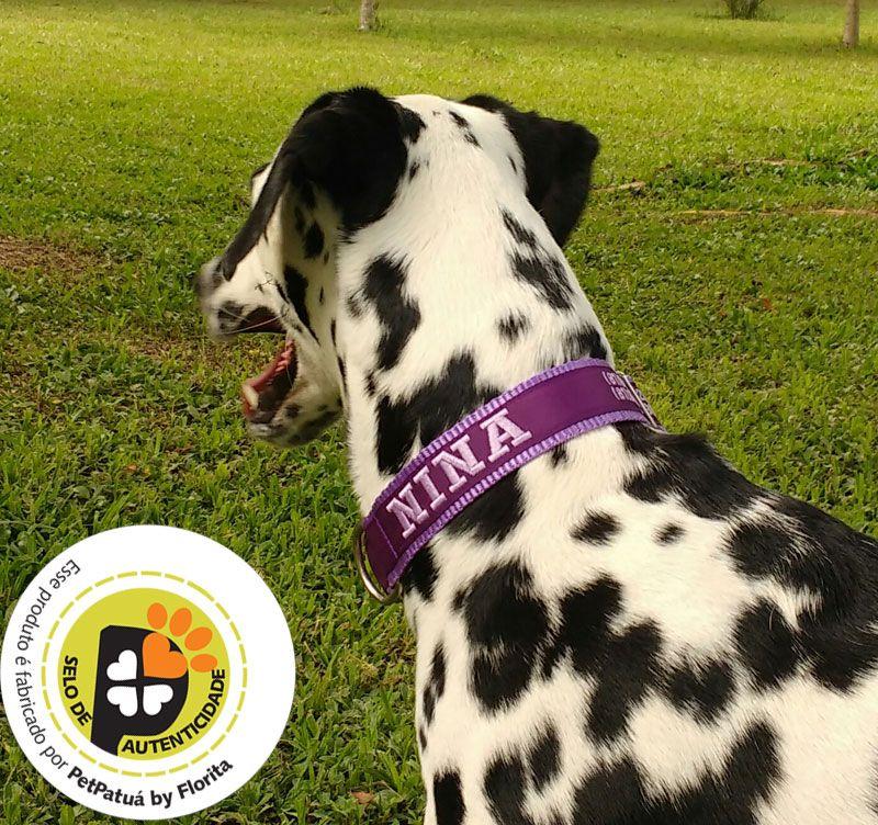 Coleira Identificação Personalizada Cachorro - Largura 3cm - M / G / GG  - PetPatuá | Coleiras e Tags para Identificação