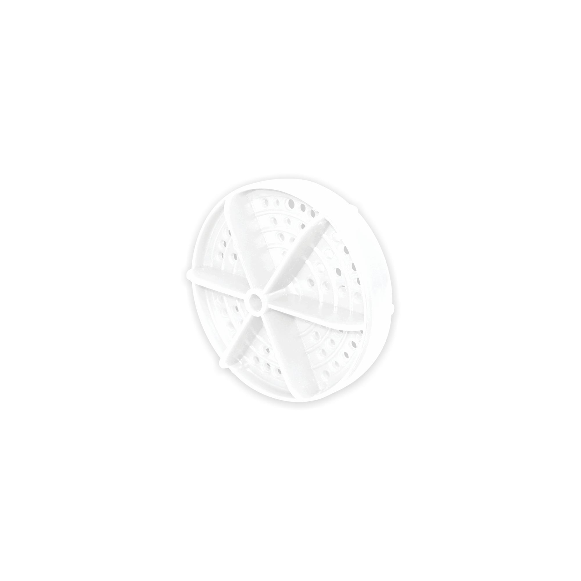 Raia de Piscina Branca