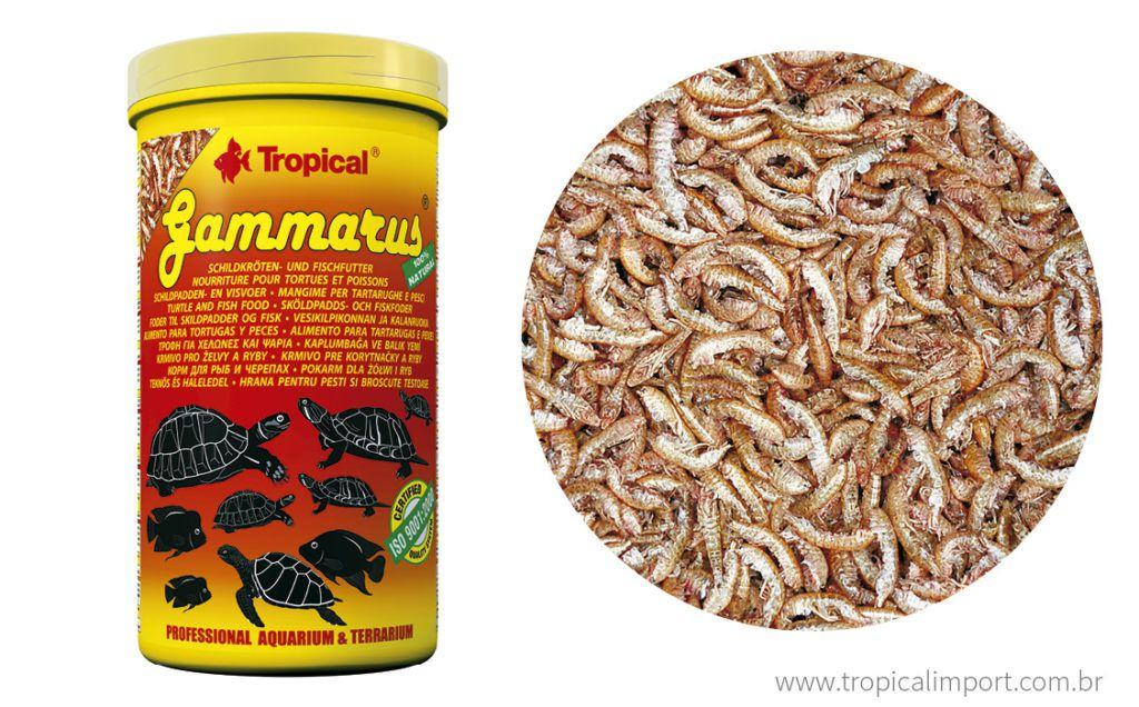 Tropical Gammarus  - Aquário Estilos