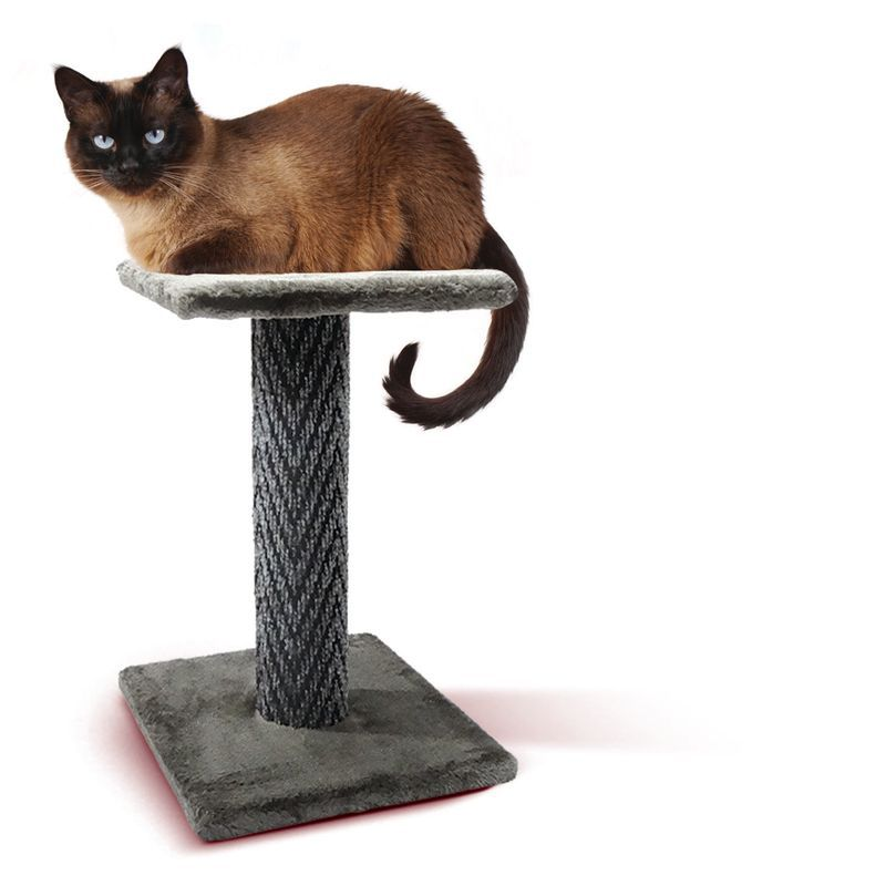 Arranhador Gato Andar Suspenso The Pets Brasil