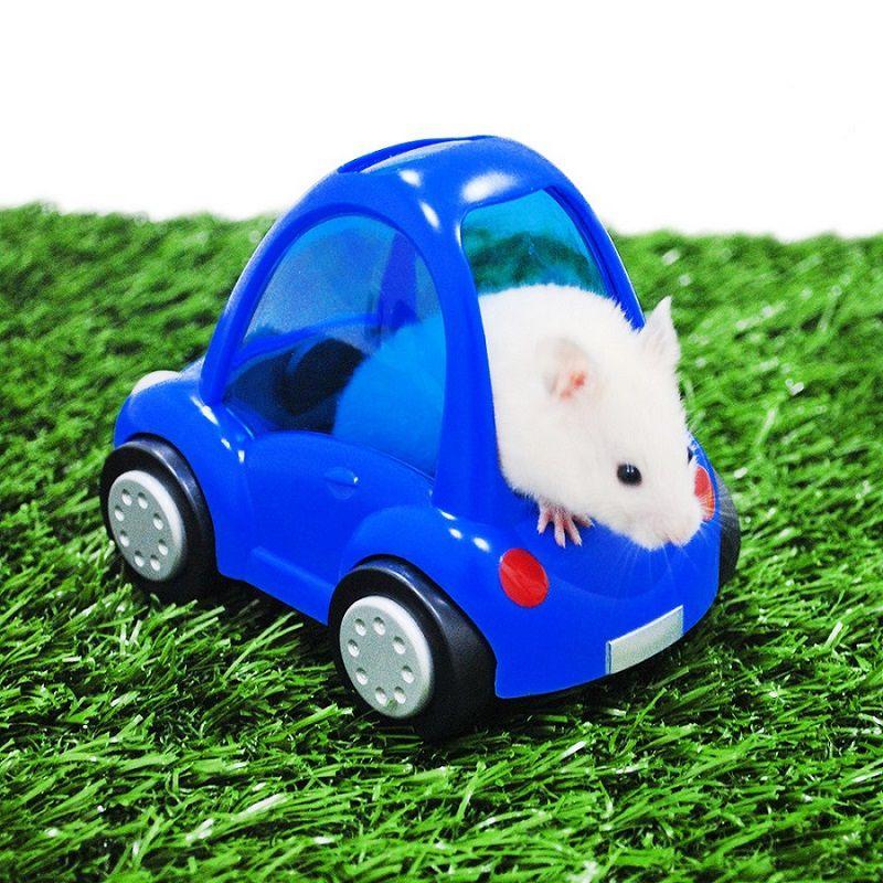 Brinquedo para Hamster Carrinho Azul