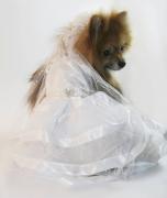 Fantasia para Cachorro Vestido de Noiva