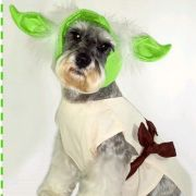 Fantasia para Cachorro YODA STAR WARS