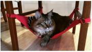 Rede para Gatos Marinho/Vermelho