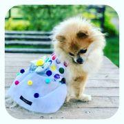 Fantasia para Cachorro Vestido Confete