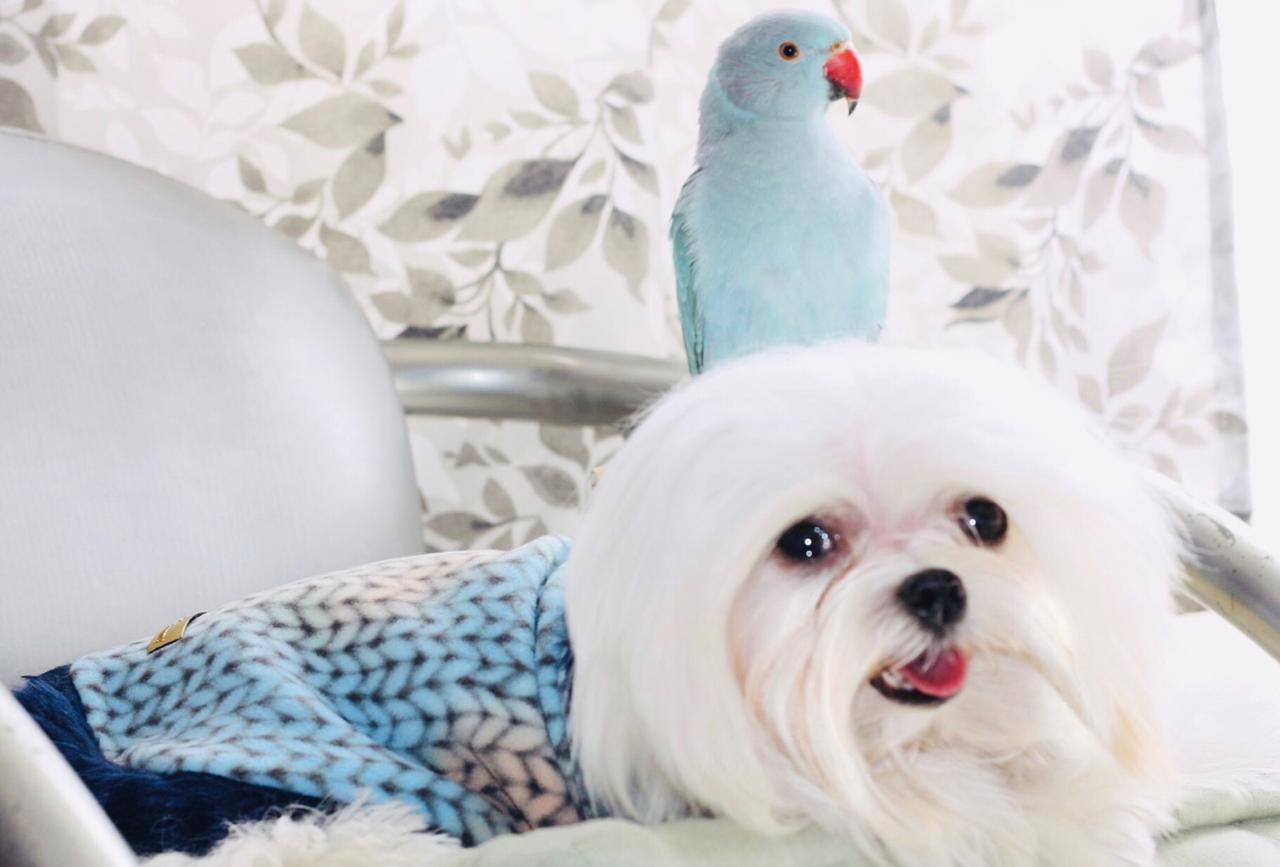 Blusa para Cachorro com gola de pelinhos azul