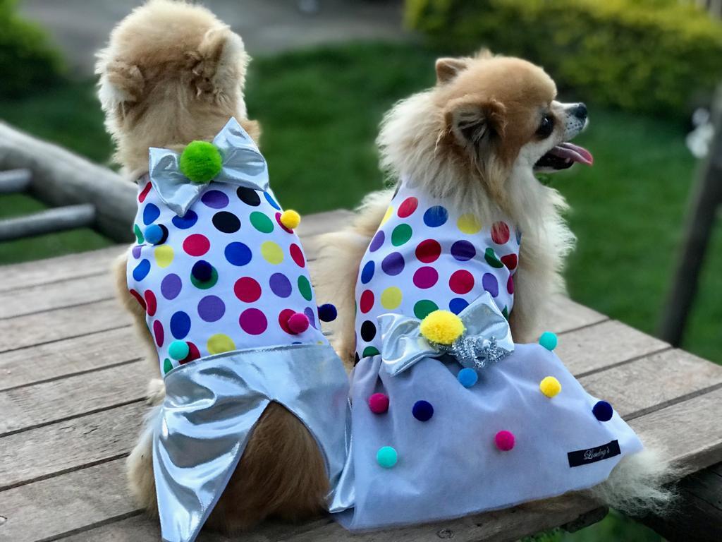 Fantasia para Cachorro Colete Confete Macho