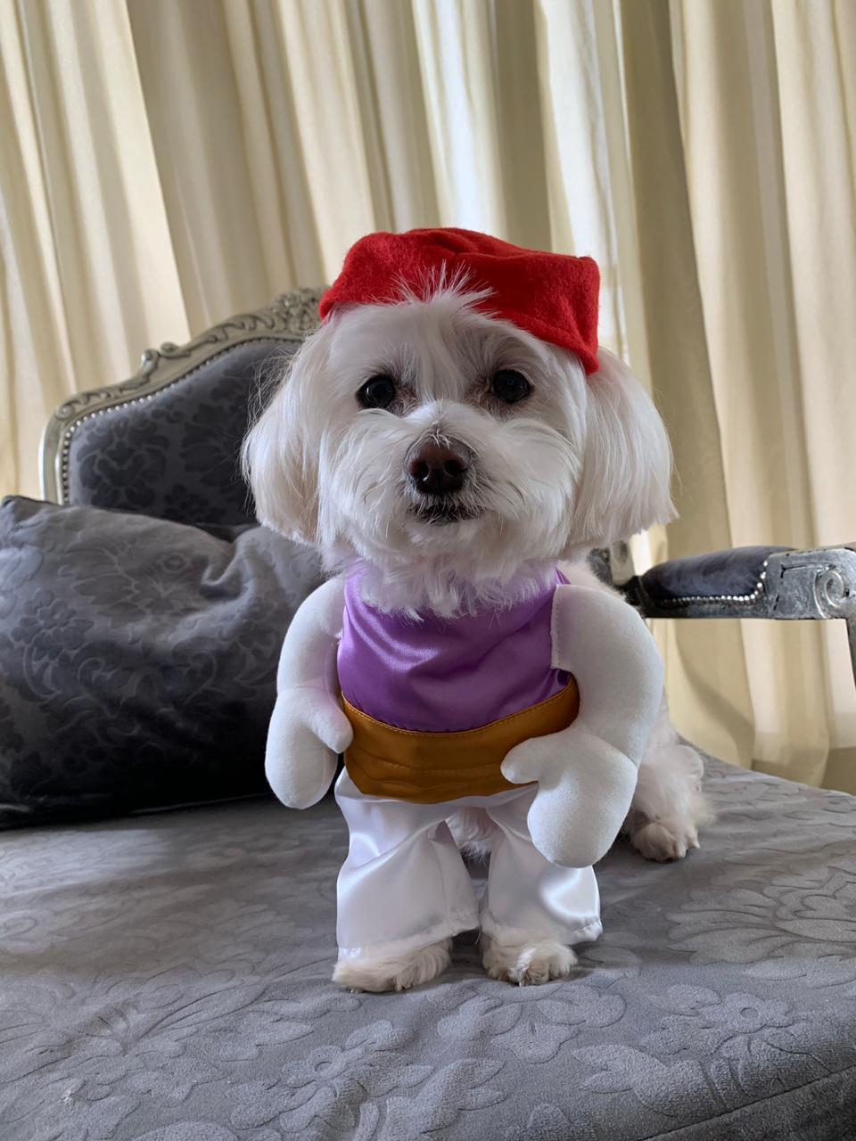 Fantasia para Cachorro Aladdin   -  Bracinhos