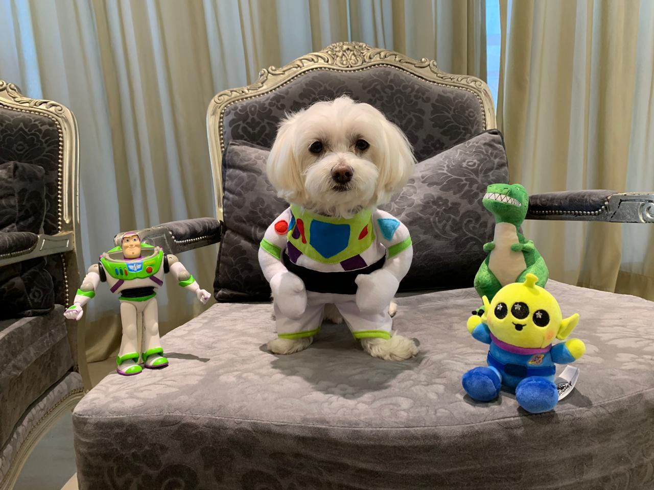Fantasia para Cachorro Buzz Lightyear- Toy Story Bracinhos