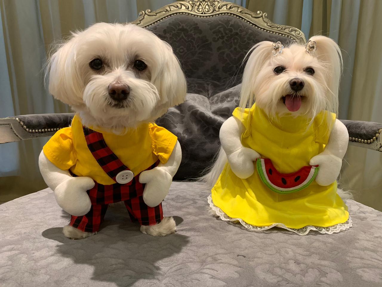 Fantasia para Cachorro Cascão - Turma da Mônica Bracinhos
