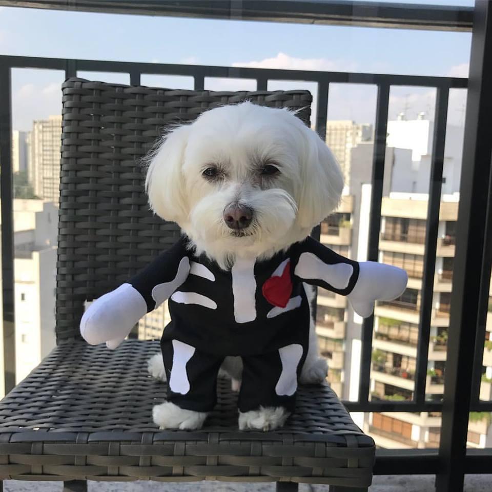 Fantasia para Cachorro Esqueleto - Bracinhos
