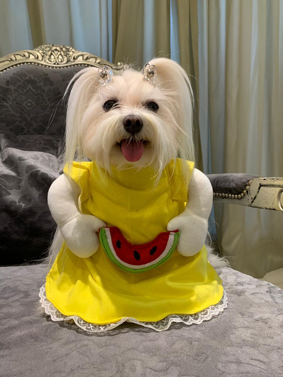 Fantasia para Cachorro Magali - Turma da Mônica - Bracinhos