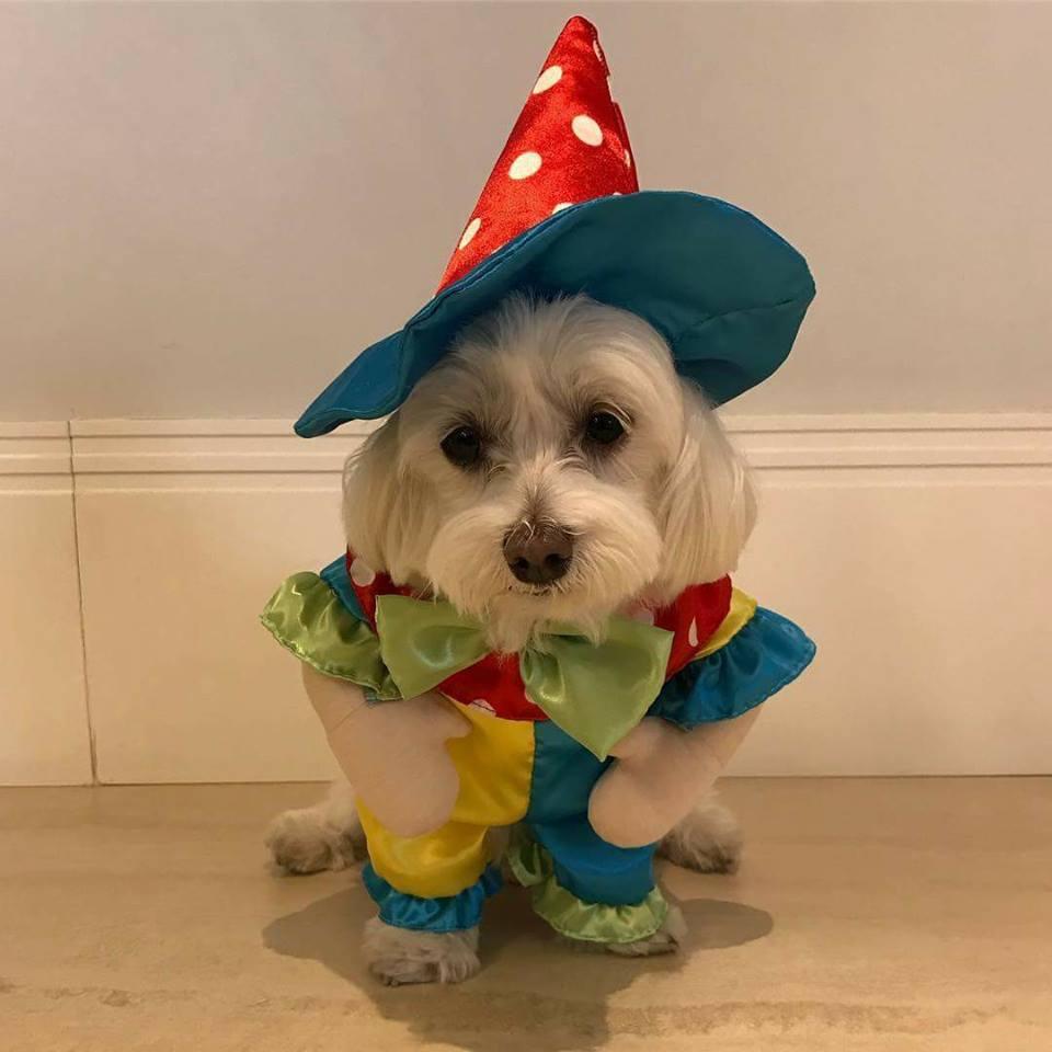 Fantasia Para Cachorro Palhaço - Bracinhos