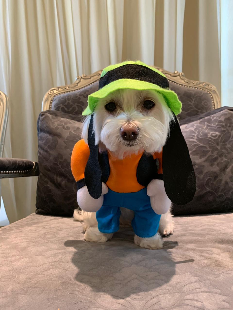 Fantasia para Cachorro Pateta -  Bracinhos