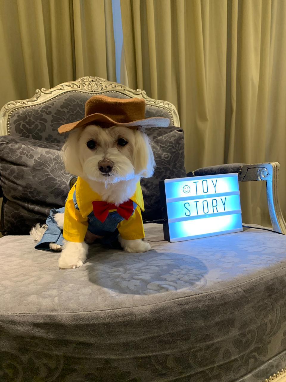 Fantasia para Cachorro - Jardineira Woody Toy Story