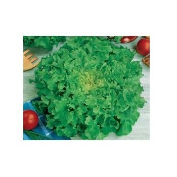 Sementes De Alface Mimosa Salad Bowl 10g Topseed