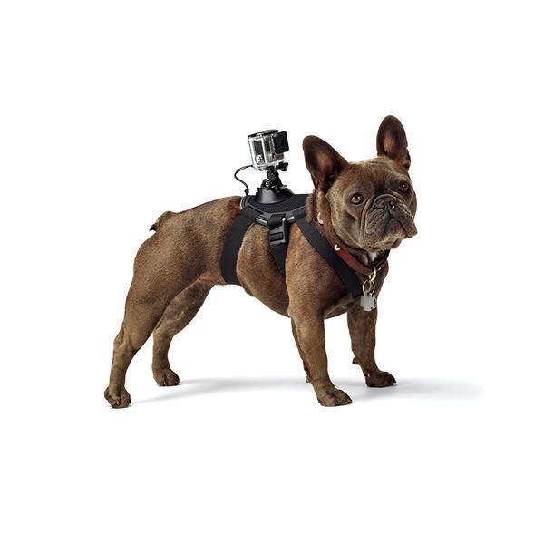 Suporte GoPRO Fetch™ Original (Dog Harness) Cachorro