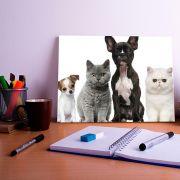 Placa Decorativa Personalizada Cachorro e Gato