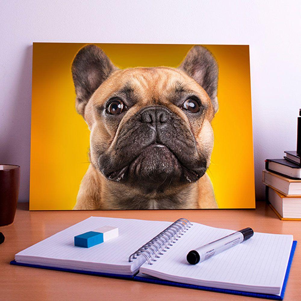 Placa Decorativa Personalizada Cachorro