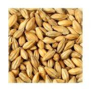 Malte Agrária - Pilsen Saca 25kg