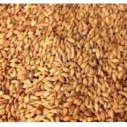 Malte Agraria Pale Ale - 1 kg