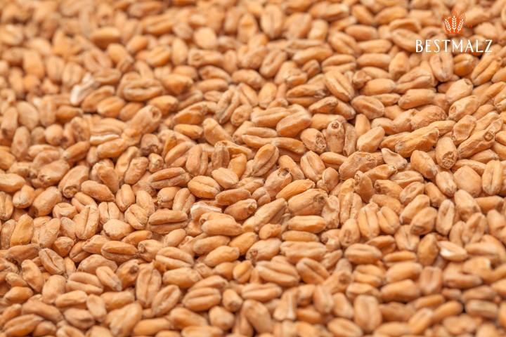 Malte Best Malz - Heidelberg Wheat Malt (Trigo Premium claro) - 1kg