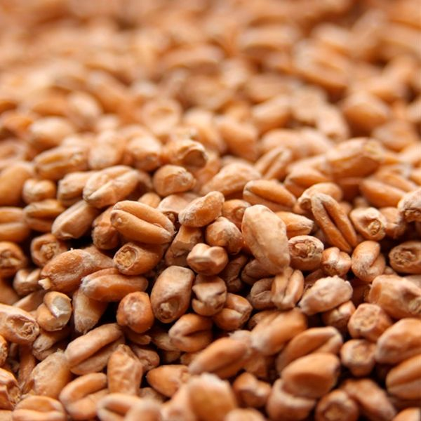 Malte Best Malz - Wheat Malt (Trigo claro) 1kg