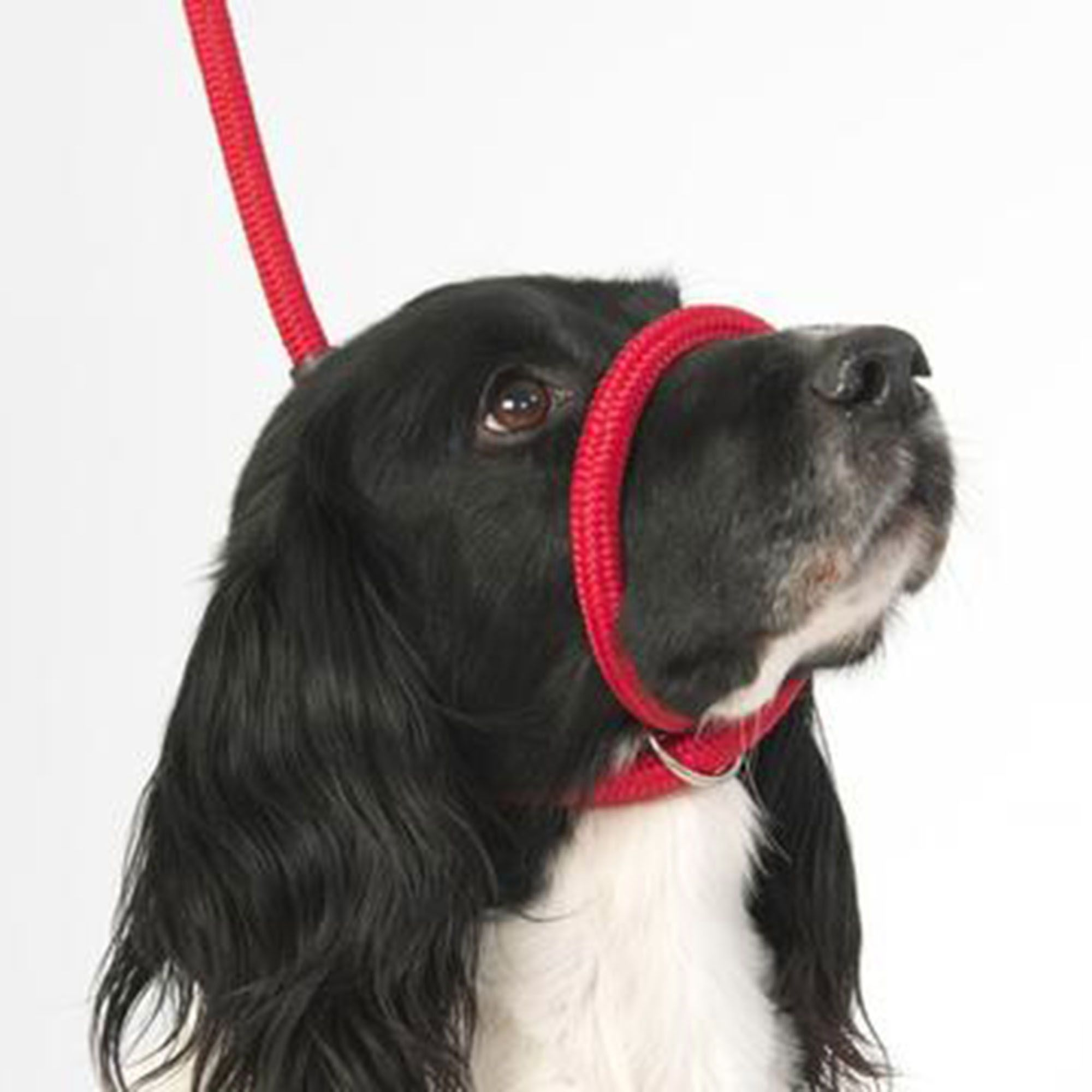 ki 2 Coleira Cabresto Softwalk Contra Puxões adestramento Canny Collar