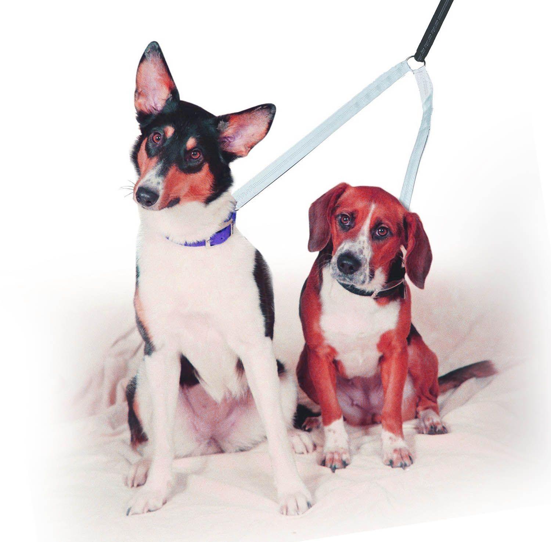 Guia dupla Adestramento E Passeio De Cães completa