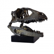 Fóssil Tiranossauro Rex em bronze