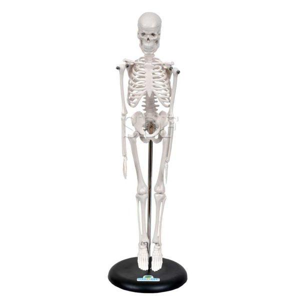 Esqueleto Humano de 45 cm C/ Suporte