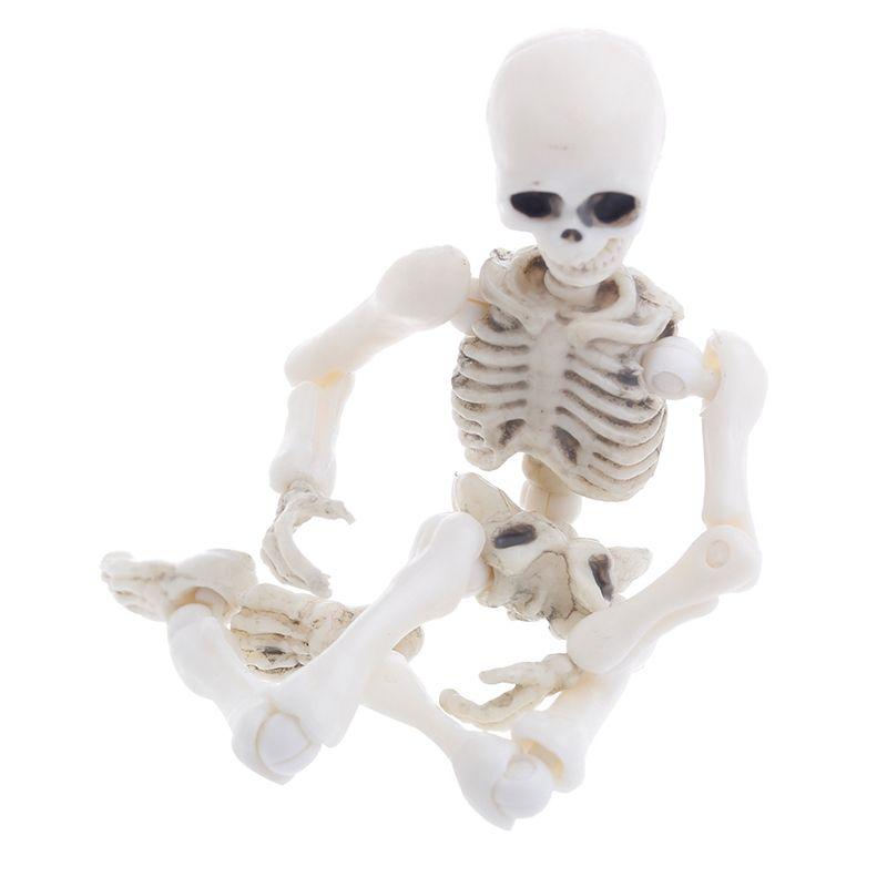 Esqueleto Humano - Modelo de Corpo Inteiro