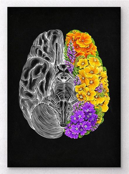 Gravuras - Anatomy Floral