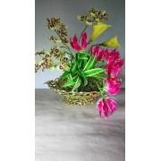 Projeto 4 em 1 - Gloriosa, Orquídea Colmanara, Callas amarelo, Pleomeles
