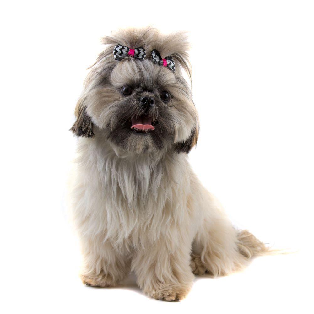 Laço para Cachorro Duplo Chevron Rosa