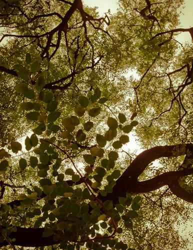 Quadro Abstrações da Natureza 60x60cm - Gisele Faria (A)