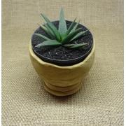 Aloe 'Black Beauty'